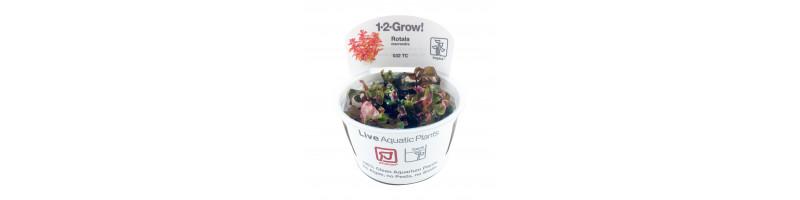 1-2 Grow planter